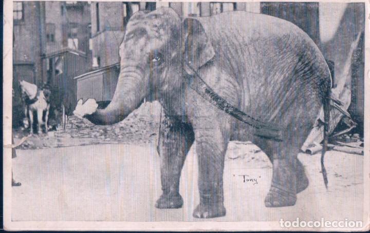 POSTAL ELEFANTE - ELEPHANT - BOSTON - PUBLISHED BY THE WYN-CRAFT CO - CIRCULADA (Postales - Postales Temáticas - Animales)