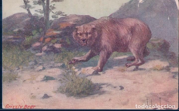 POSTAL GRIZZLY BEAR - ILUSTRADOR JOHN INNES - TROILENE - OSO PARDO (Postales - Postales Temáticas - Animales)