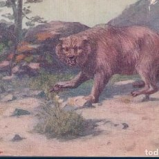 Postales: POSTAL GRIZZLY BEAR - ILUSTRADOR JOHN INNES - TROILENE - OSO PARDO. Lote 184681873