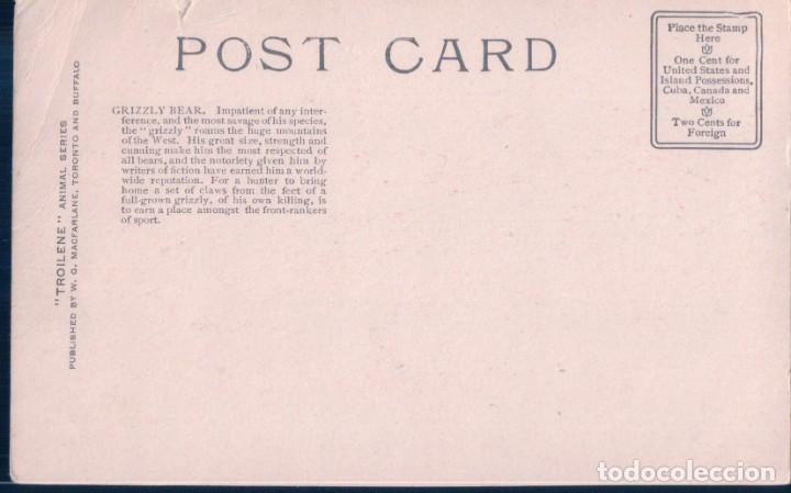 Postales: POSTAL GRIZZLY BEAR - ILUSTRADOR JOHN INNES - TROILENE - OSO PARDO - Foto 2 - 184681873