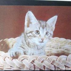 Postales: POSTAL ALEMANIA GATITO. Lote 186047162