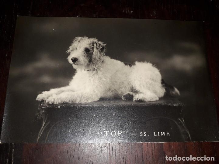 Nº 7482 POSTAL PERRO TOP SS LIMA (Postales - Postales Temáticas - Animales)