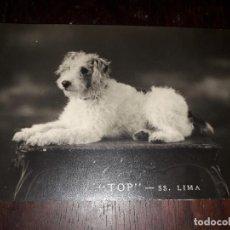 Postales: Nº 7482 POSTAL PERRO TOP SS LIMA. Lote 186407383