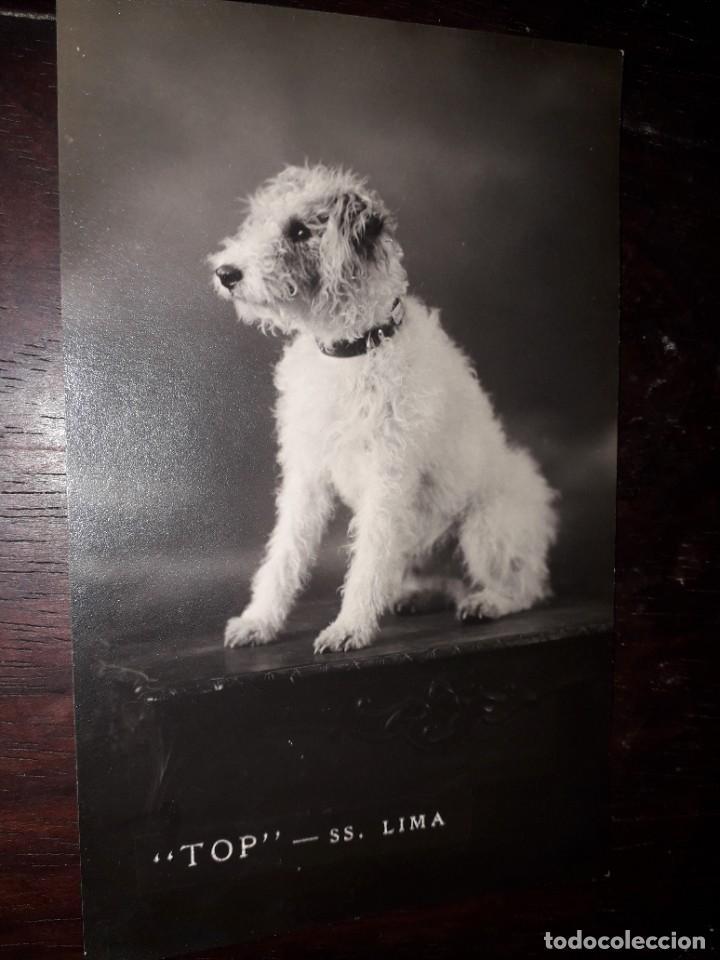 Nº 7483 POSTAL PERRO TOP SS LIMA (Postales - Postales Temáticas - Animales)
