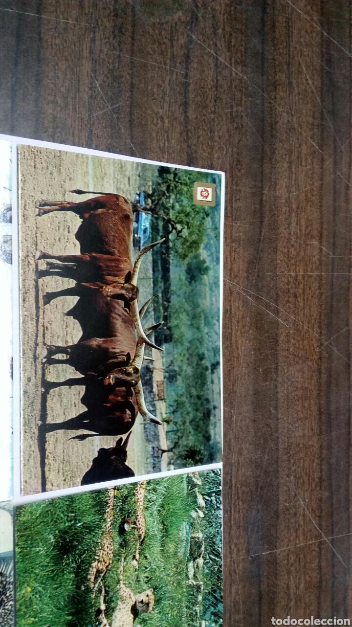 Postales: Rioleon Safari Park Albiñana - Foto 2 - 186430546