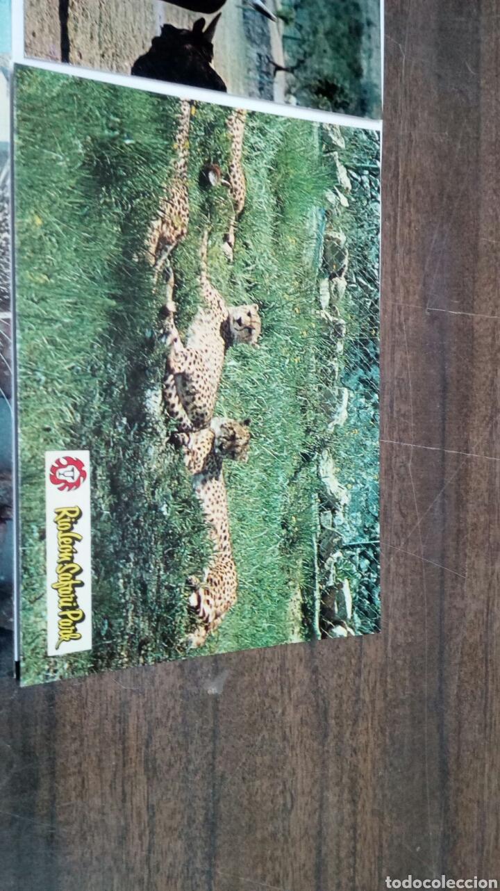 Postales: Rioleon Safari Park Albiñana - Foto 3 - 186430546