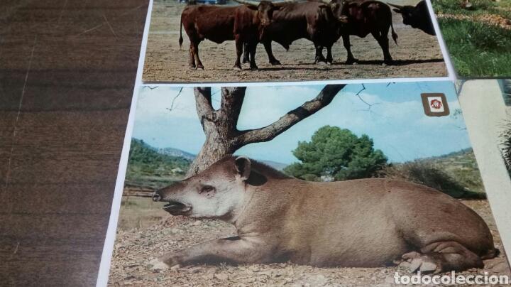 Postales: Rioleon Safari Park Albiñana - Foto 4 - 186430546