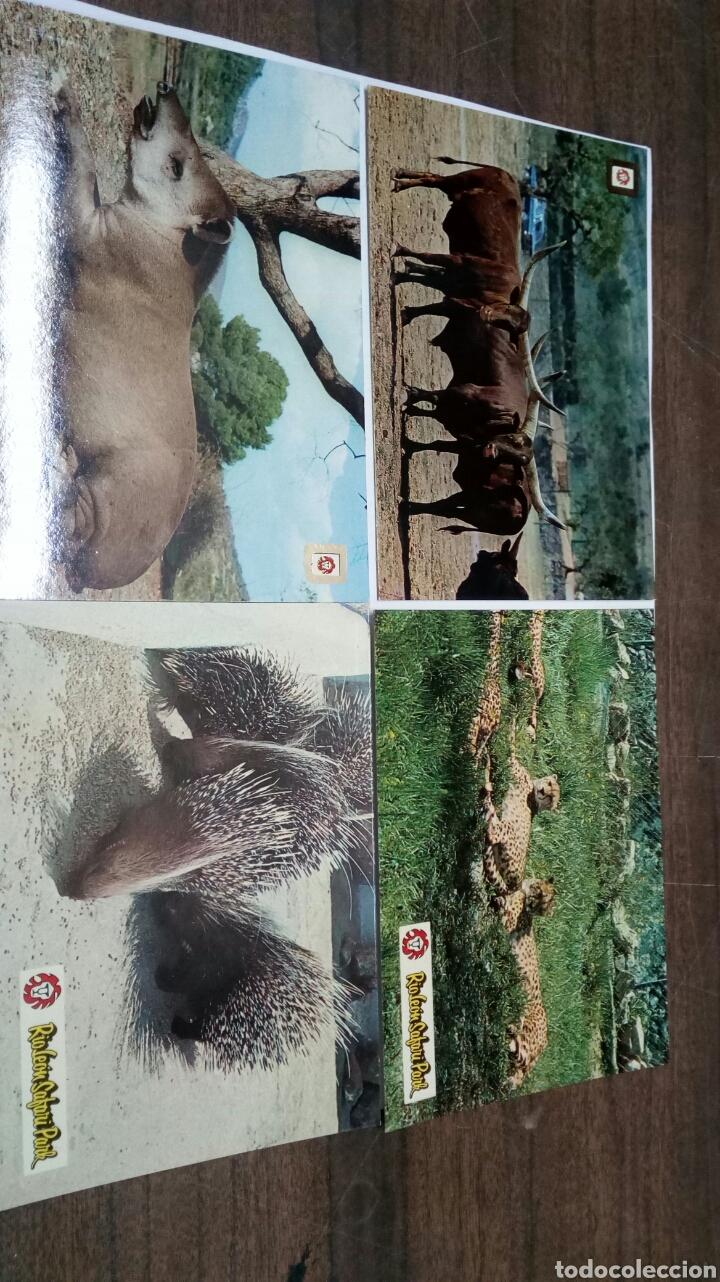 RIOLEON SAFARI PARK ALBIÑANA (Postales - Postales Temáticas - Animales)