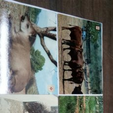 Postales: RIOLEON SAFARI PARK ALBIÑANA. Lote 186430546