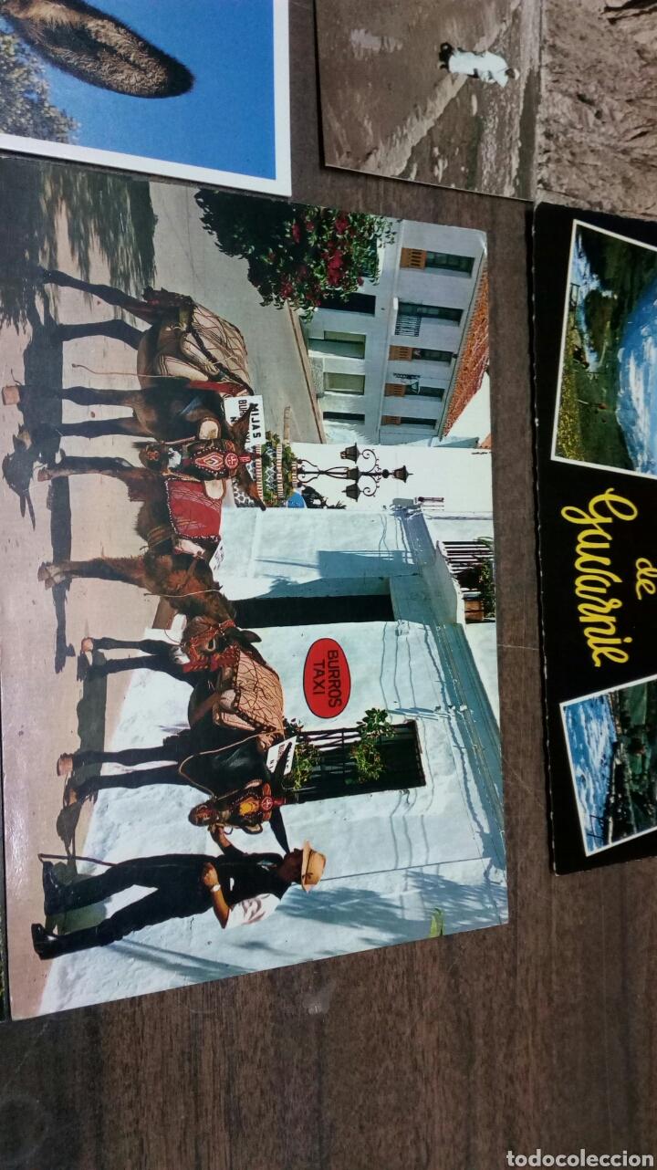 Postales: 8 Postales Burros - Foto 5 - 186430906
