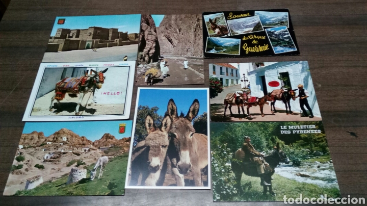 8 POSTALES BURROS (Postales - Postales Temáticas - Animales)