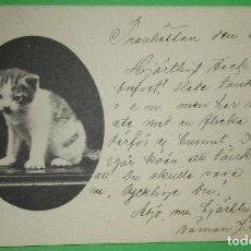 Postales: POSTAL ANTIGUA DE UN GATO. CIRCULADA. 1903.. Lote 188486360