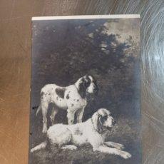 Postales: POSTAL FRANCESA DE CUADRO DE PERROS DE L. DAREY. GRIFFONS BOTARDS SANITONGEAIS 1910 Nº4389. Lote 188778952