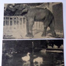 Postales: P-9687. FOTOGRAFIAS ZOO BARCELONA. AÑO 1915. TRES EJEMPLARES.. Lote 189379536