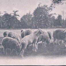 Postales: POSTAL FRANCESA DE REBAÑO DE OVEJAS PASTANDO - CIRCULADA. Lote 190812112