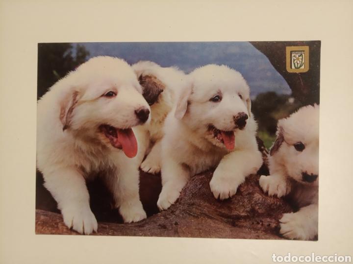 PERROS (Postales - Postales Temáticas - Animales)