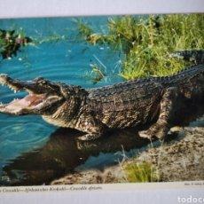 Postales: POSTAL COCODRILO AFRICANO JOHN HINDE. Lote 191385698