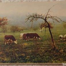 Postales: POSTAL DE 1900. Lote 191455162