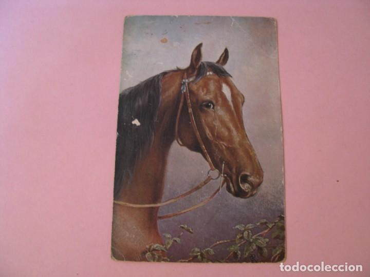 POSTAL DE CABALLO. BIT AND BRIDLE. TUCK'S POST CARD. SERIE OILETTE. (Postales - Postales Temáticas - Animales)