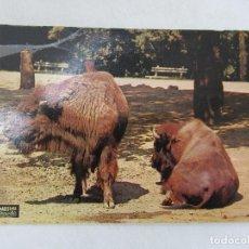 Postales: ZOO DE BARCELONA - BISONTES - S/C. Lote 191612293
