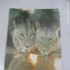 Postales: LEONES - SOUTH AFRICA - S/C. Lote 191712643