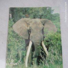 Postales: ELEFANTE - SOUTH AFRICA - S/C. Lote 191712688