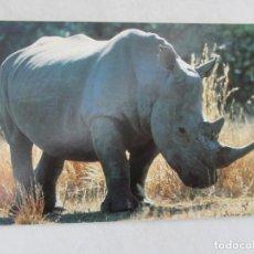 Postales: RINOCERONTE - SOUTH AFRICA - S/C. Lote 191712715