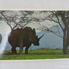 Postales: RINOCERONTE BLANCO - SOUTH AFRICA - S/C. Lote 191724431