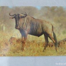 Postales: ÑU - SOUTH AFRICA - S/C. Lote 191724540