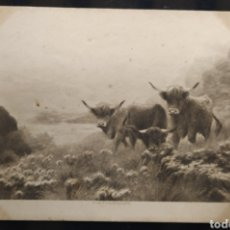 Postales: C.R. POSTAL ANTIGUA BECERROS. Lote 191776958
