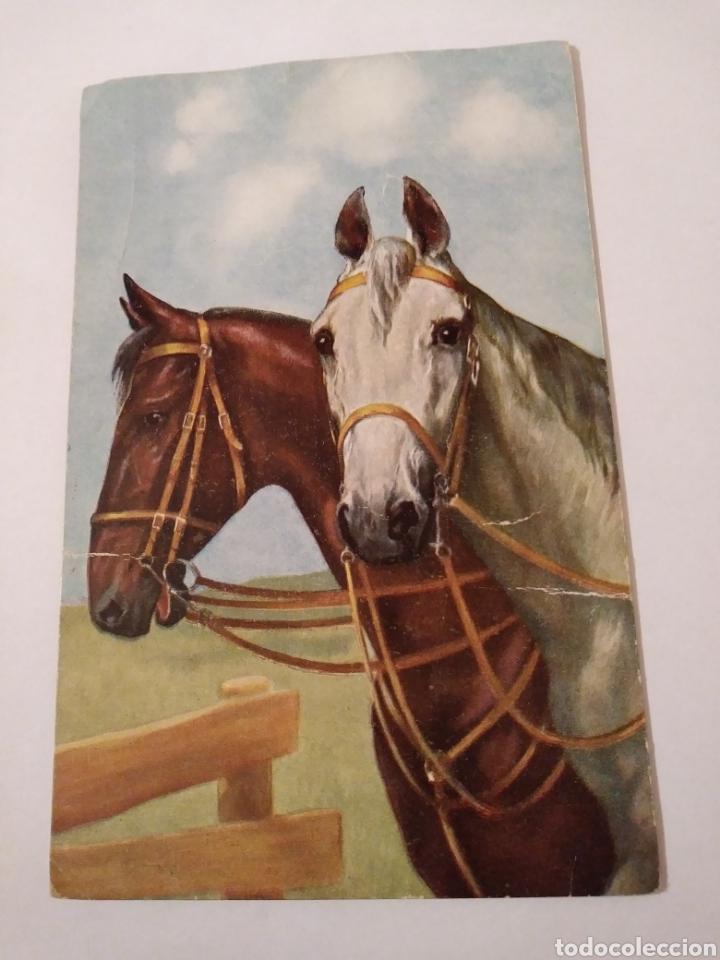 ANTIGUA POSTAL CABALLOS T.S.N. SERIE 1772 (6DESS.) (Postales - Postales Temáticas - Animales)