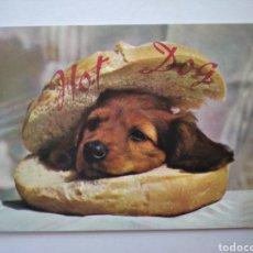 Postales: POSTAL PERRO HOT DOG FRANCIA. Lote 192865202