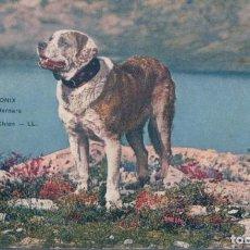 Postales: POSTAL CHAMONIX - LE GRAND SAINT BERNARD - CHIEN - 530 LL - PERRO SAN BERNARDO. Lote 193166302