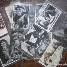 Postales: LOTE DE POSTALES CON ARCHIVADORES, TEMA CHIMPANCÉS. Lote 194178563