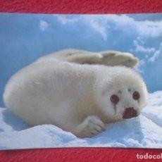 Postales: POSTAL NORUEGA NORGE NORWAY SELUNGE HARP SEAL PUP CACHORRO DE FOCA EN LA NIEVE ANIMAL VER FOTO....... Lote 194187410