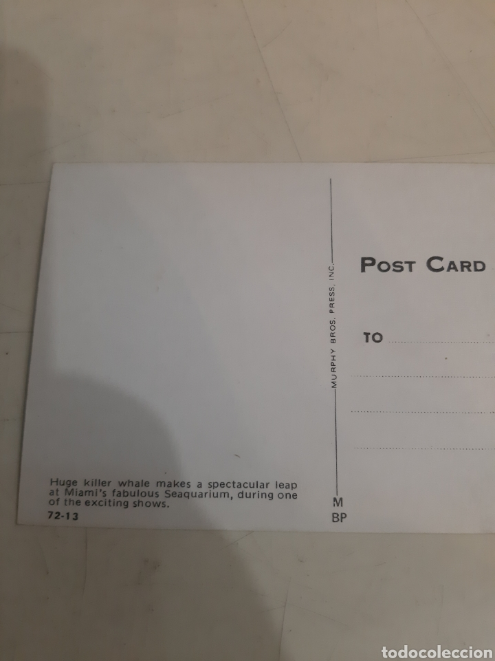 Postales: Miami Orcas Seaguartium - Foto 2 - 194264918