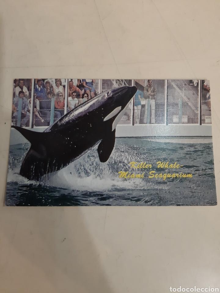 MIAMI ORCAS SEAGUARTIUM (Postales - Postales Temáticas - Animales)