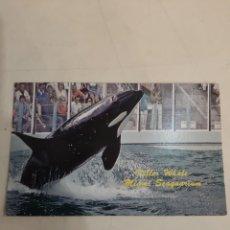 Postales: MIAMI ORCAS SEAGUARTIUM. Lote 194264918