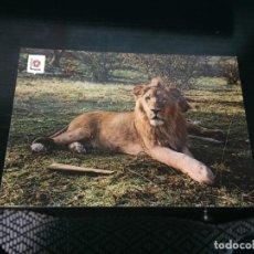 Postales: POSTAL DE RIO LEON SAFARI PARK- LA DE LA FOTO VER TODAS MIS POSTALES. Lote 194272577