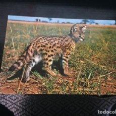 Postales: POSTAL DE FAUNA DE KENYA - LA DE LA FOTO VER TODAS MIS POSTALES. Lote 194273051
