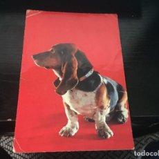 Postales: POSTAL PERRO - LA DE LA FOTO VER TODAS MIS POSTALES. Lote 194378352