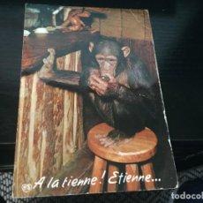 Postales: POSTAL CHIMPANCE - LA DE LA FOTO VER TODAS MIS POSTALES. Lote 194378491