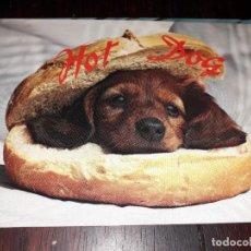 Postales: Nº 35997 POSTAL PERRO HOT DOG ZURICH VEVEY. Lote 194492973