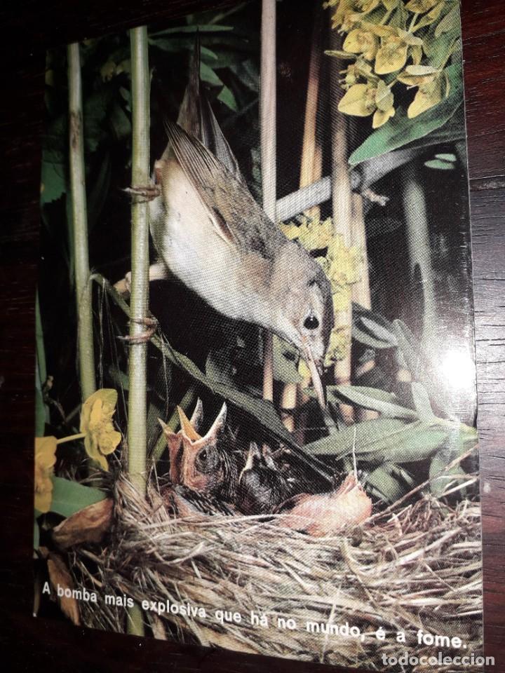 Nº 36000 POSTAL PAJARO (Postales - Postales Temáticas - Animales)