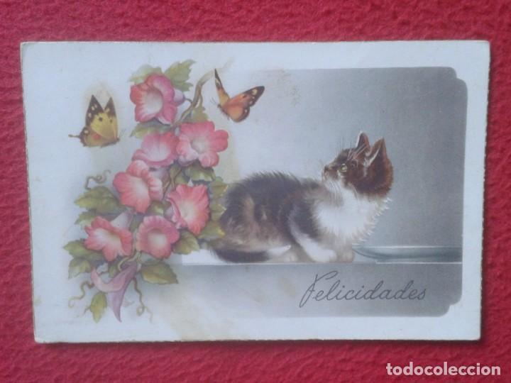 ANTIGUA POSTAL POST CARD FELICITACIÓN FELICIDADES GATO Y MARIPOSAS CON FLORES C. Y Z. CAT BUTTERFLY (Postales - Postales Temáticas - Animales)