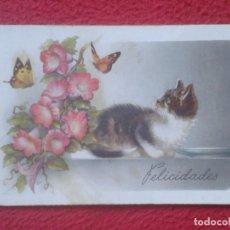 Postales: ANTIGUA POSTAL POST CARD FELICITACIÓN FELICIDADES GATO Y MARIPOSAS CON FLORES C. Y Z. CAT BUTTERFLY. Lote 194498600