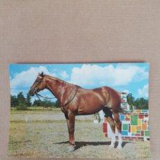 Postales: POSTAL CABALLO 620. Lote 194706663