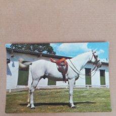 Postales: POSTAL CABALLO SERIE 620. Lote 194706775