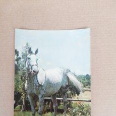 Postales: POSTAL CABALLO SERIE 620. Lote 194706932