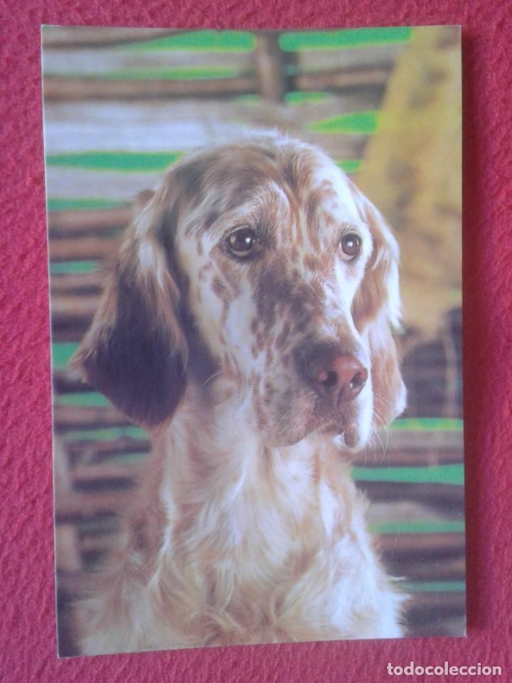 POSTAL POST CARD C. Y Z. PERRO DOG CAN HUND CHIEN NO ESCRITA NI CIRCULADA, Nº 7892-C ESPAÑA......VER (Postales - Postales Temáticas - Animales)